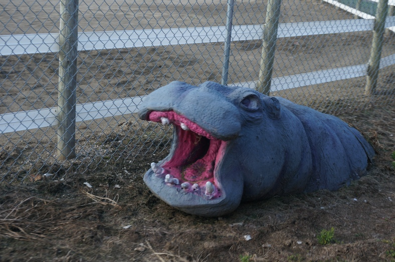 This was a great surprise of the train ride, a random hippo placed along the tracks. Awesome!
