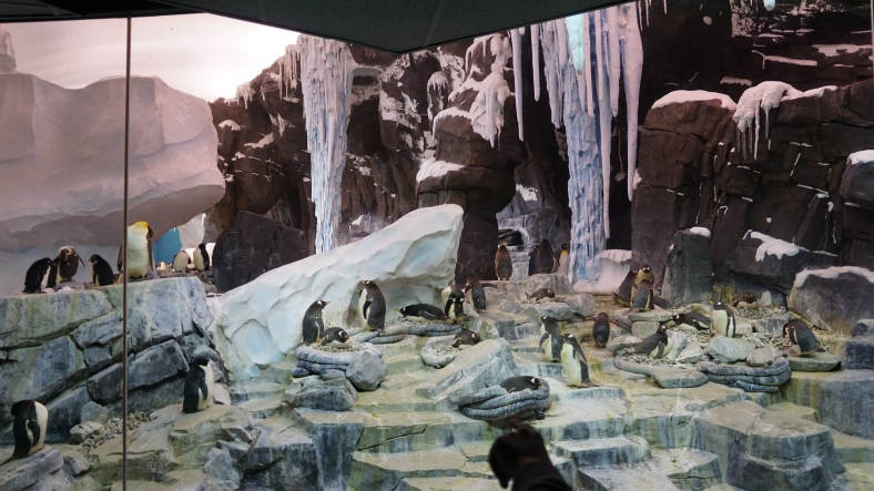 .... the screen lifts and there's real penguins! A really cool finale but the rest of the ride really lacked. They could have done so much more with those vehicles. Really felt like a half finished ride.