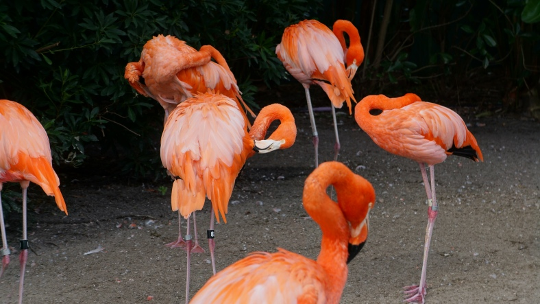 Here's some flamingos for you. :P