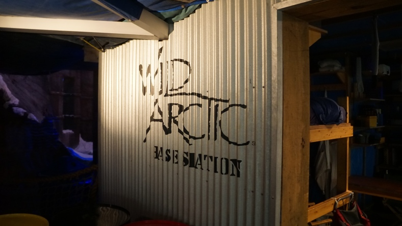 See told you... Wild Artic.